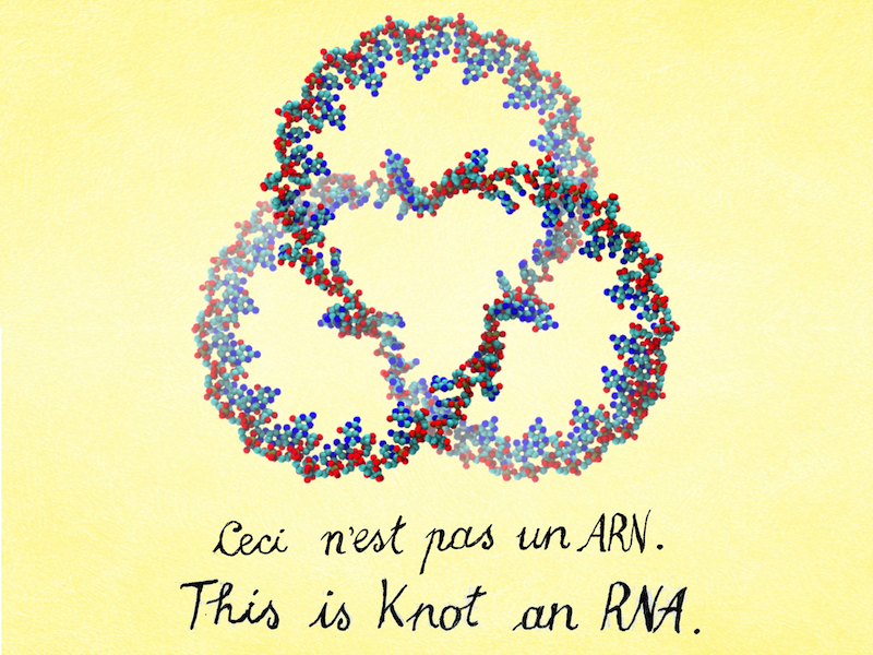 RNA: The unknotted strands of life